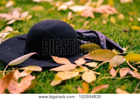 Gloves and hat in the leafs in the park