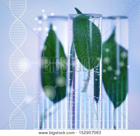 Test tubes with green leaves, closeup. Blue toned. Scientific research concept.