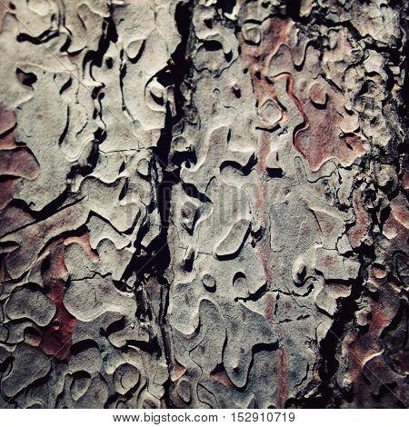 Pine Tree Bark Texture. Close Up. Aged Photo.