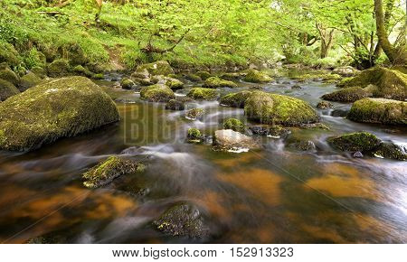 Stream surrounded by green forest, glencree valley, Ireland