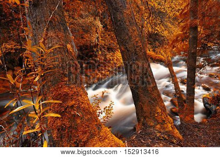 Newell Creek In Tasmania
