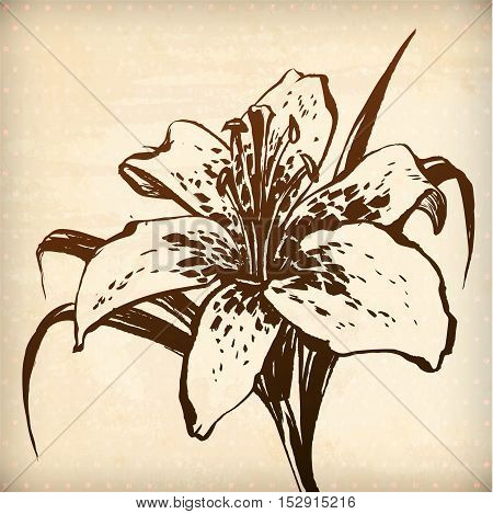 Vector floral lilly background. Hand drawn graphic for your design. All elements were placed in clipping mask and are easy to edit
