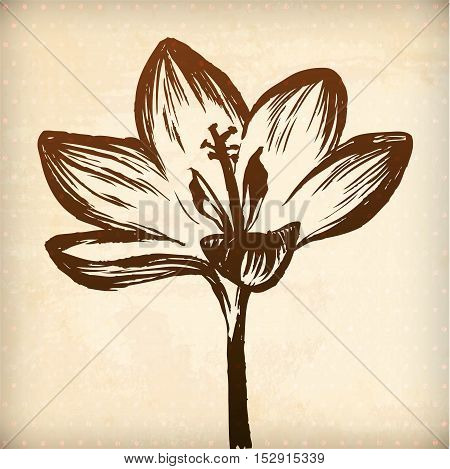 Crocus flower. floral vector hand drawn graphic for your design. All elements were placed in clipping mask and are easy to edit