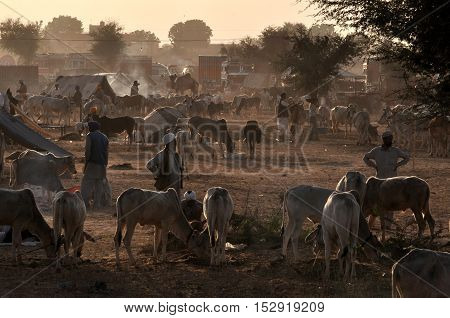 Naguar Rajasthan India- Febuary 10 2011: Farmers with their cattles at Naguar Cattle Fair at Naguar Rajasthan India. Nagaur Cattle Fair (also known as Ramdeoji Cattle Fair) is held every year in the month of Jan-Feb in Nagaur district of Rajasthan is the