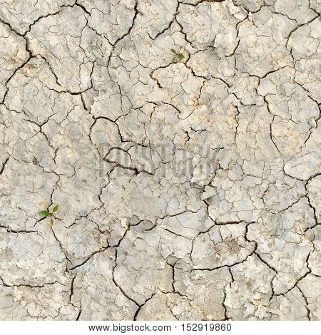 Seamless texture of dry desert land with cracks.