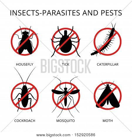 Destroying Insect icon. Vector illustration isolated on white.