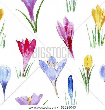 Crocus seamless pattern.Watercolor hand drawn illustration.White background.