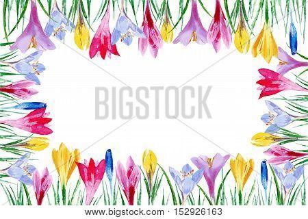 Border from crocus flowers.Postcard witn saffron. Watercolor hand drawn illustration.Spring snowdrops.