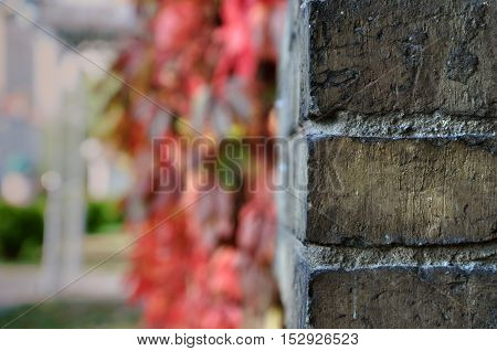 Old brick wall close up in perspective. Red grapes in the blurred background.