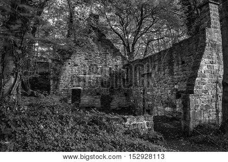 Spooky Old Ruined Derelict Building In Thick Forest Landscape In Black And White