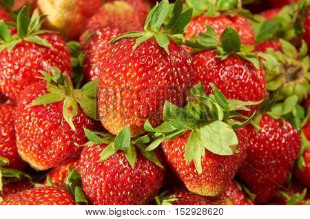 Strawberries  Background Closeup