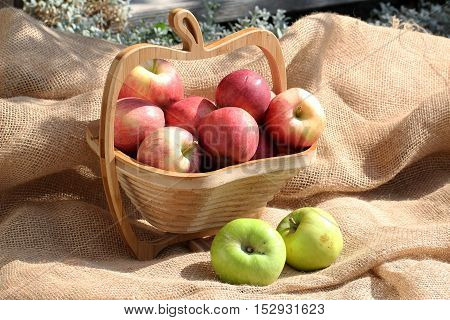 Fresh fruit / small basket with ripe apples