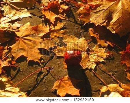 Nature captured in the autumn during the sunny day