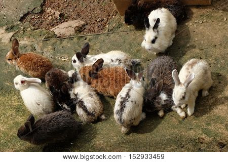 Many cute rabbits sit on the ground in the garden