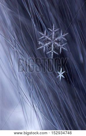 Snowflake On Fur