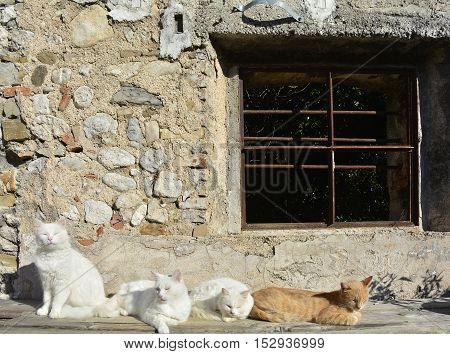 A row of cats enjoying the late morning autumn sun at a north east Italian derelict farm building