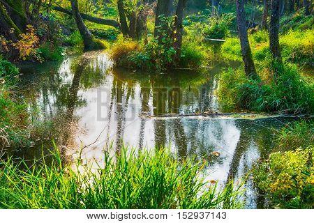 Beautiful warm autumn landscape lake,swamp,pond, wonderful background
