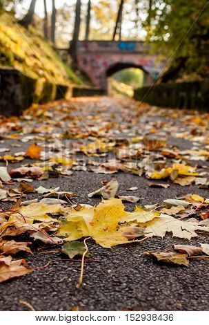 Autumn path full of yellow leafs leads to the bridge