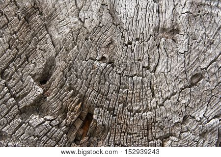 A fragment of cross section of wooden logs. Texture background