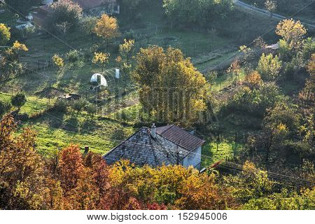 Close up photo of rural scene. Seasonal natural theme. Vibrant colors. House and gardens. Living in symbiosis.