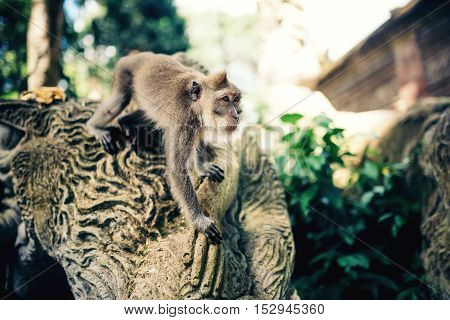 Exotic Details Of Jungle With Portrait Of Monkey. Expressive Long Tailed Monkey Running For Food