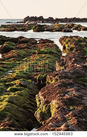 The passetto rocks covered of seaweed at sunrise Ancona Italy