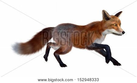 3D Rendering Red Fox On White
