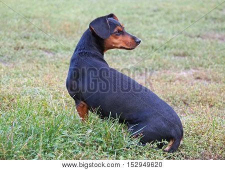 The beautiful small doggie on a natural background