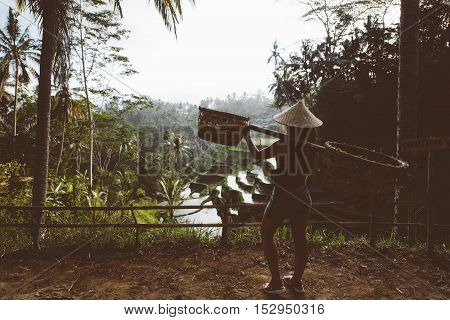 Young agriculture woman carrying tools on rice terraces in Ubud Village Bali Indonesia. Rice terraces during golden light. Silhouette of woman on vintage edit