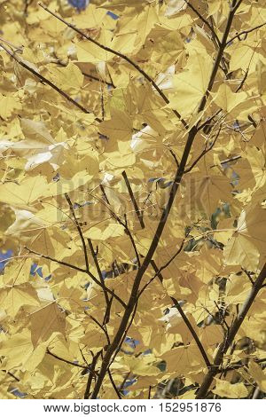 dried autumn leaves on tree as a background