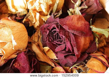 Collection Of Dried Roses Gift Husband