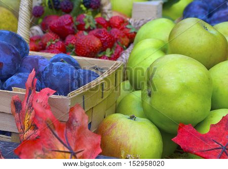 Autumn harvest concept. Ripe organic fruits and berries with autumn leaves. Apples,plums,strawberries,blackberries.Selective focus.