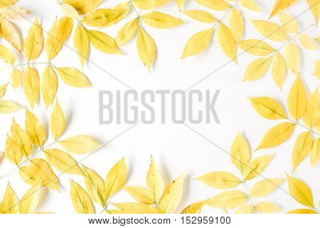 yellow fall autumn leaves. Autumn floral frame. flat lay top view