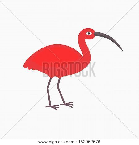 pink Ibis bird on the white background. Vector illustration for children in flat style