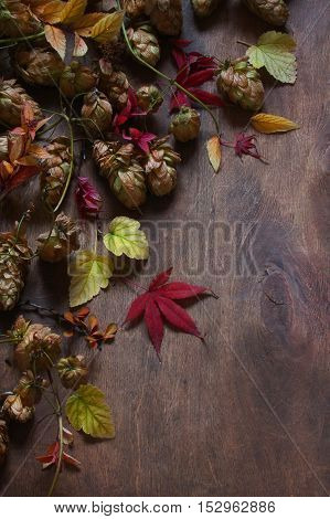 Still life with autumn leaves hops on wooden background