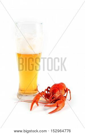 crawfish boiled and light beer in a glass