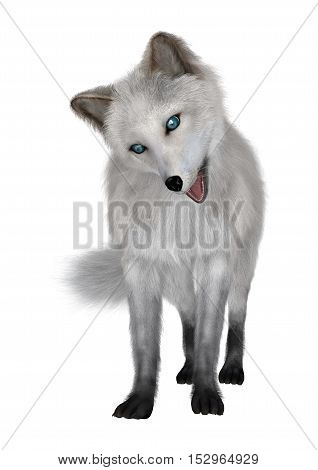 3D rendering of an arctic fox isolated on white background
