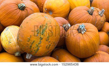 Several Pumpkins on display at a farm shop