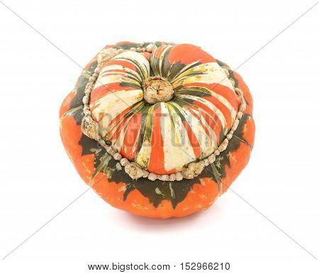 Orange, White And Green Turks Turban Squash