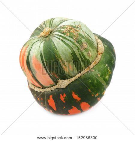 Green And Orange Turban Squash