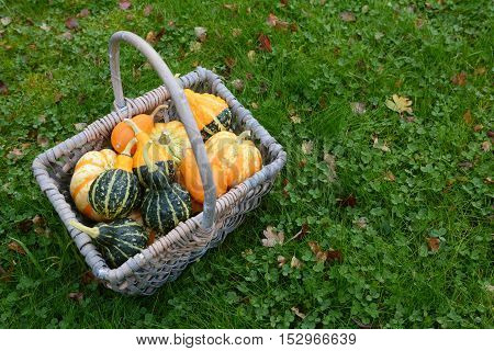 Basket Full Of Attractive Ornamental Squash