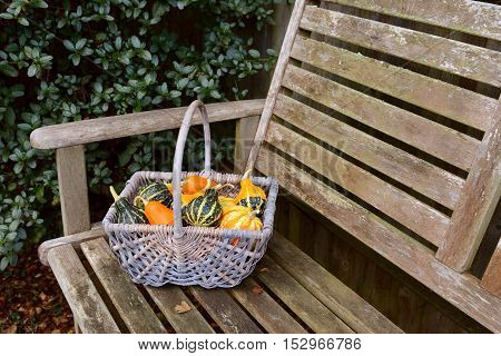 Woven Basket Full Of Orange, Green And Yellow Ornamental Gourds