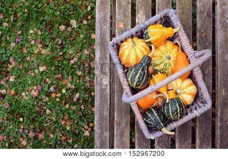 Orange, Green And Yellow Ornamental Gourds In A Basket