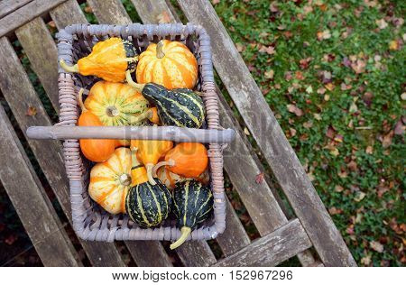Basket Full Of Small Ornamental Pumpkins On A Bench