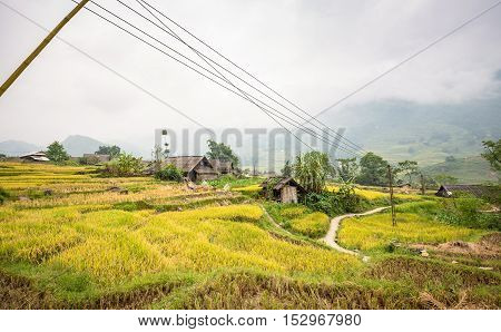 Green and yellow rice terraces with small building surrounded by foggy mountain at Lao Chai village of Sa Pa Vietnam