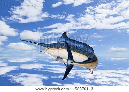Marlin - SwordfishSailfish saltwater fish (Istiophorus) isolated on sky background with water reflex