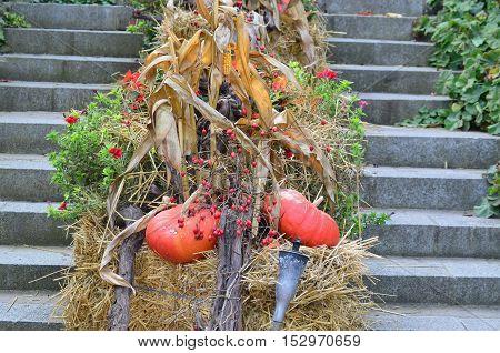 Autumn flower garden decoration Lower Austria Austria