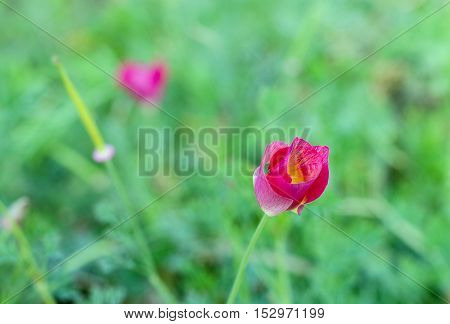 Red flowers on a green unfocused background
