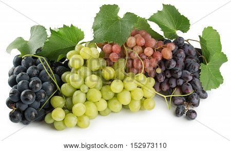 green purple and pink grapes isolated on the white background.