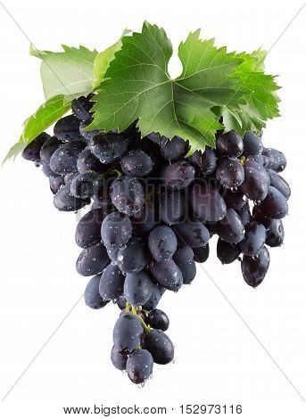 purple grapes isolated on the white background.
